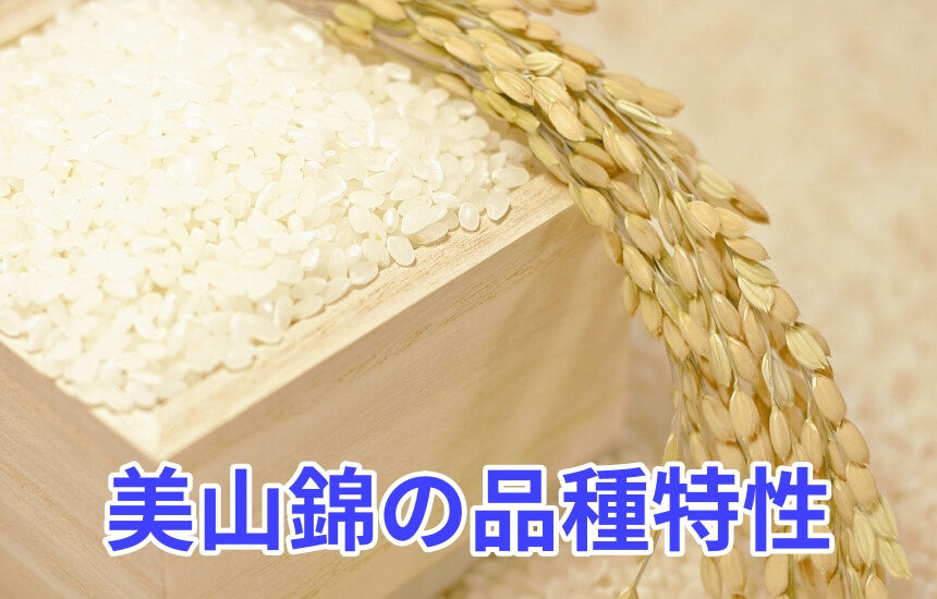 美山錦の品種特性